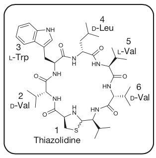 '路鄧菌素(lugdunin)的化學結構'